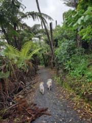 Katikati walkway