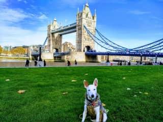 Travel in London!