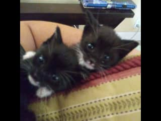 This is Romy and Michele when they were babies before I decided to keep them forever! #FosterFail