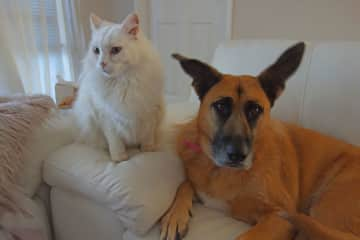 Best friends - Layla and Casper, we cared for in Connolly/Perth