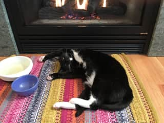 Zorro loves our gas fireplace