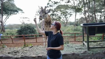 The Giraffe Center in Nairobi protects the highly endangered Rothschild's giraffe, and combines serious conservation with enjoyable activities, like feeding and 'kissing' the giraffe