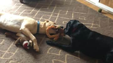 Parker and Humphrey playing