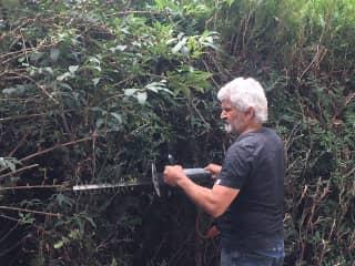 Mario trimming cedar trees, La Barbeliniere Castel, summer 2020