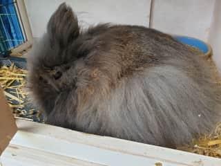Last but not least.. Hi, I am Muis, the rabbit!