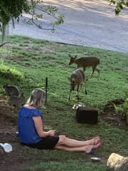 Sonja feeding our bunnies and wild 🦌 in our garden