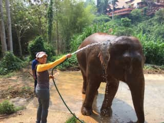 Niramai bathing rescue elephant-Thailand