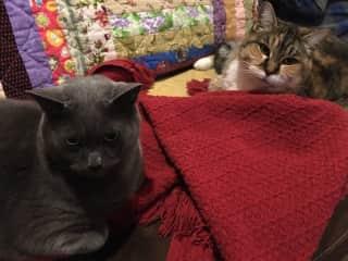 Our own feline family, Gypsy Boy and RJ