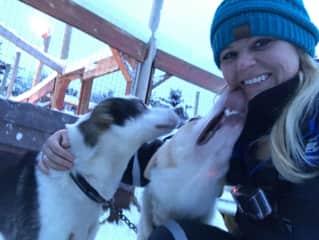 Playing with Alaskan racing huskies in Norway
