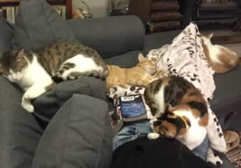 4 cat pile reading session...