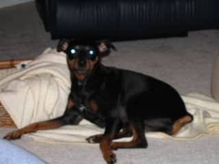My second dog, Molly, who I rescued. She was with me for 15 yrs.