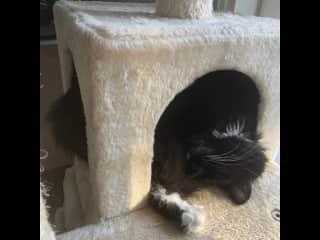 Sunny naps