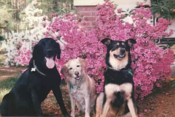 My kids when I lived in NC.  Lucky, Rex and Shiwa