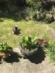 Back yard area.  Kitties are usually indoors... but once in a while I let them explore.