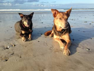 Adi (left has passed) and Viny (right). Viny is 12 years old. My brother puppy, Murray.  He is 8 years old.