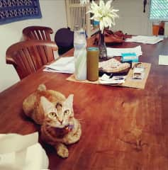 pixie on dining room table