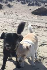 Little friends on the Monterey beach!