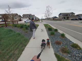 Dog sitting near Denver