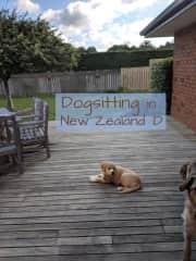 dogsitting in NZ