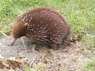 Wildlife visiting my back yard - Edward