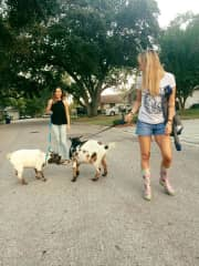 We used to have goats and I taught them to walk on a leash!