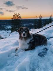 Foster is a good boy too!  My most recent dog sit. Spokane, WA