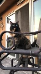Luna enjoys the view too