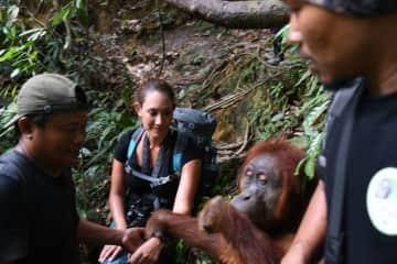 North Sumatra with semi wild Orangutan Jackie who approached me on a trek