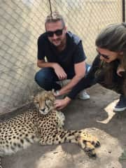 With a hurt Cheetah in Hartebeespoort Sanctuary, SOUTH AFRICA