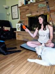 Michaela training our Czech Shepherd Severus and Swiss Shepherd Kilala