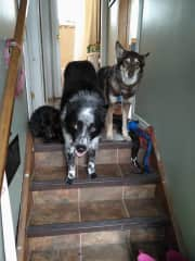 2017-Spruce, Bruin and Cannelle: the first 2 are dogsit.