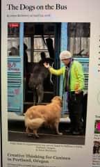 "My interview with Meg Vogt, the beloved ""dog bus driver"" of Portland, Oregon"