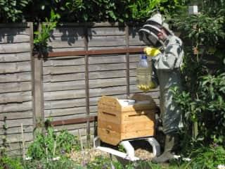 Sam feeding the bees