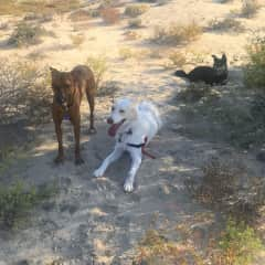 Henry with Jasper and Ollie and the desert