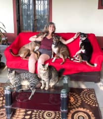 Joy, Baldrick, Jessie with Mister and Missy Cat (India)