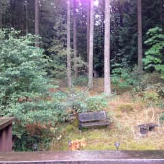 View from back balcony of my forest