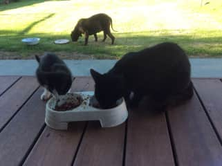 Pet sitting for friends locally