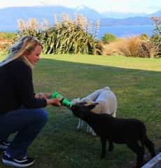 Diann feeding sheep in New Zealand