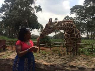 I got the honor of feeding a giraffe in Kenya!