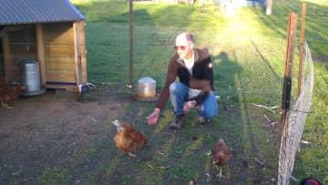 Trevor feeding hens, Armidale