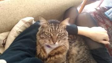 Max, magical lap cat