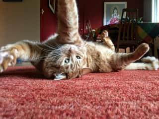 Prana doing yoga.