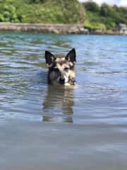Jessie swimming in the lake