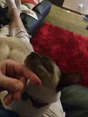someone enjoying being petted... ;-)