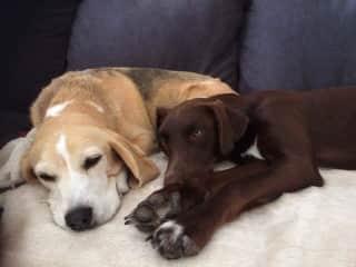 Billie and Murphy (best buddies)