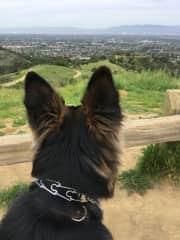 On a hike with Ziggy