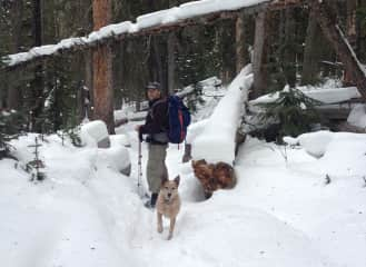 Peter hikes with Kala in Colorado.