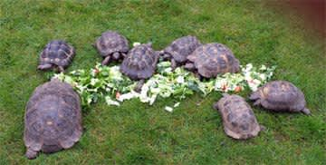 Tortoises England 2018 & 2019