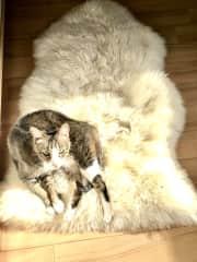 The queen of cats