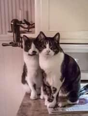 Jessie and Sparky